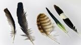¿Te gustaría saber más sobre las plumas?